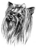 12 Yorkshire Terrier Notelets with Envelopes